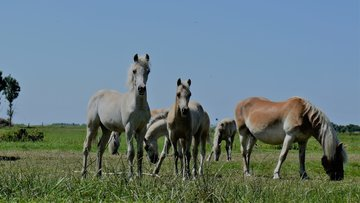 Samenstelling paardenmelk